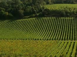 Making your winery energy efficient