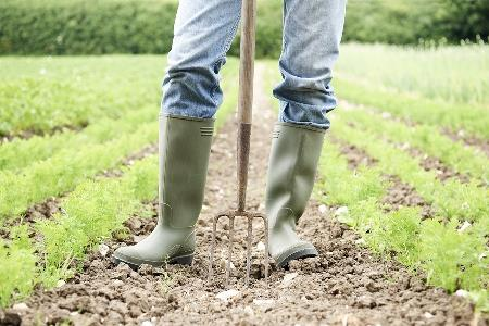 AUSVEG backs calls for clampdowns on 'dodgy' farm labour hire