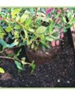 Soil Mixes | Planter Box
