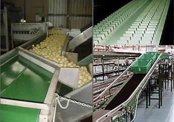 Conveyor Belting   WA Belting Solutions